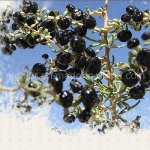 Medlar Ecocert Certificate Organic Black Goji Berry pictures & photos