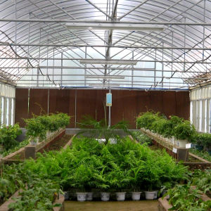 Multispan Plastic Film Greenhouse for Tomato Cucumber Flower Vegetable Growing pictures & photos