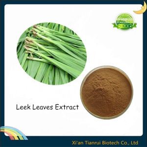 100% Natural Leek Leaf Extract pictures & photos