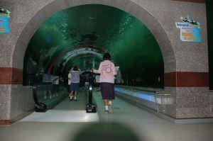 New Style Acrylic Fish Tanks/Aquarium pictures & photos