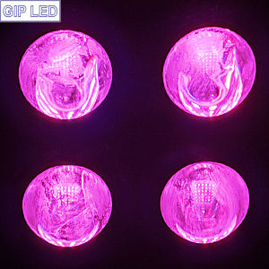 New Gip Horticulture 504W 600W High Power Full Spectrum COB Plant LED Grow Lighting pictures & photos