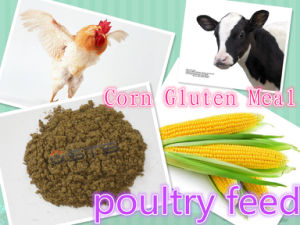 High Quality and Lowest Price Corn Gluten Meal pictures & photos
