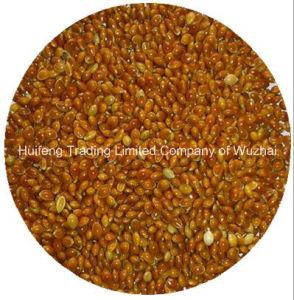 Broom Corn Millet (Red) for Sale