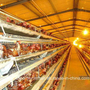 Automatic Layer Chicken Farm Equipment with SGS Certification pictures & photos