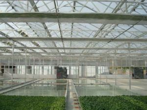 70% Discount Venlo Multi-Span PC Board Agricultural Greenhouse pictures & photos