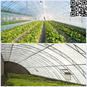 Meyabond Anti-Insects Net, Crops Protect Netting pictures & photos
