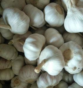 New Crop Fresh Normal White Garlic (5.0cm) pictures & photos