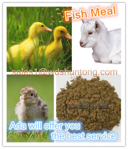 Fish Meal with High Protein for Poultry Feed pictures & photos