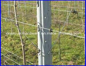 Vineyard Post pictures & photos