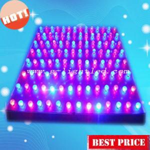 45W LED Grow Light (GL-G-45W)