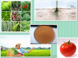 Organic NPK Compound Fertilizer Agricultural 40-50% Amino Acid Powder pictures & photos