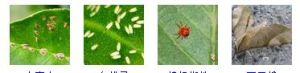 New Insecticide Formulation Wdg Lufenuron&Emamectin Benzoate pictures & photos