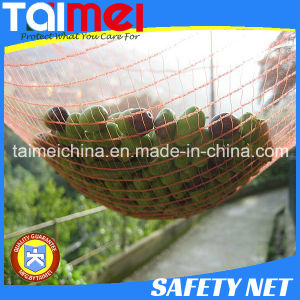 HDPE Agriculture Fruit/Olive Net/Harvest Nets/Collection/Collecting Net pictures & photos