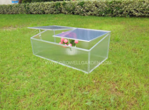 Double Window Cold Frame Greenhouse (CF202) pictures & photos