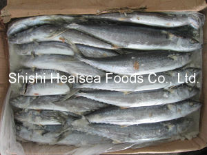 Good Quality Frozen Spanish Mackerel 500-700g pictures & photos