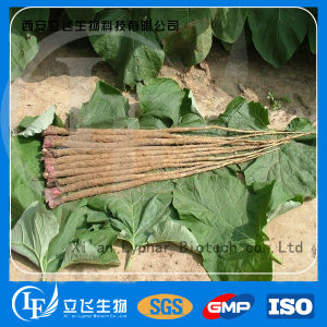 Factory Provided 100% Natural Burdock Root Extract
