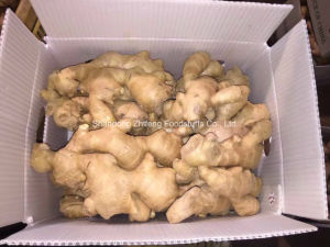 Air Dry Ginger in China pictures & photos