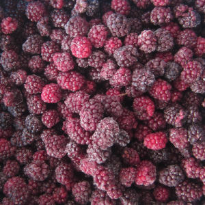 IQF Freezing Organic Blackberry Zl-019