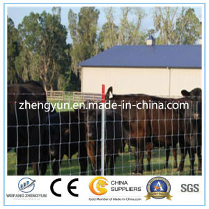 Galvanized Used Fencing Field Fence for Sale /Cattle Fence pictures & photos