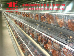 Jinfeng Battery Cage Design for Layer Chicken pictures & photos