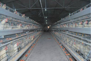 a Frame Layer/Broiler Breeding Chicken Cage Equipment System for Poultry Farm Use pictures & photos