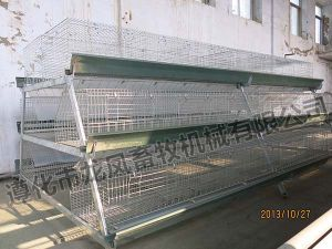 Galvanized a Type of Rearing Cage with Long Life Span