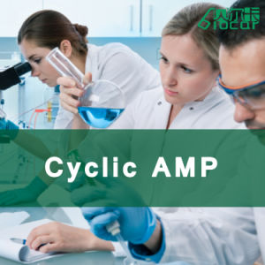 High Quality 99.6% Cyclic AMP (CAS 60-92-4)