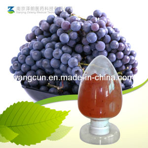 Natural 95% Proanthocyanidins Grape Seed Extract pictures & photos