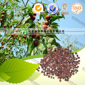 for Good Sleep Herbal Medicine Spina Date Seed pictures & photos