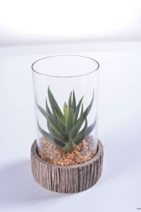 Mini Aloe in Glass Vase with Mini Rock for Decoration pictures & photos