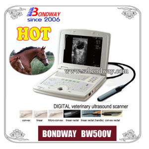 Vet Ultrasound for Pregnancy Imaging of Bovine, Equine, Llama, etc pictures & photos
