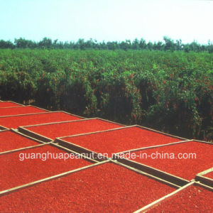 Best Quality Dried Goji Berry From China pictures & photos