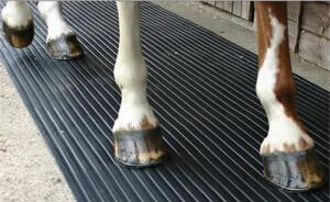 Best Hardness Stable Cow Horse Rubber Flooring pictures & photos
