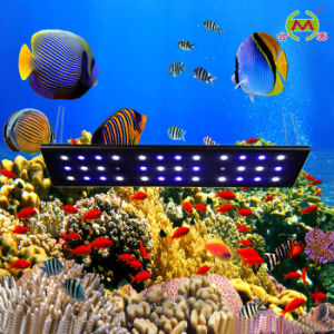 36*3W LED Aquarium Light (HM-A108-36)