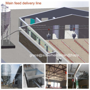 Automatic Poultry Equipment for Broiler Production pictures & photos