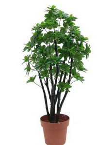 Artificial Plants and Flowers of Schefflerra Gu-Mx-Schefflerra-80cm pictures & photos