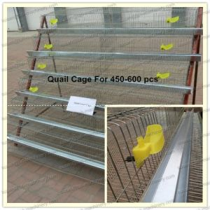 Hot Sales for Quail Cage Automatic