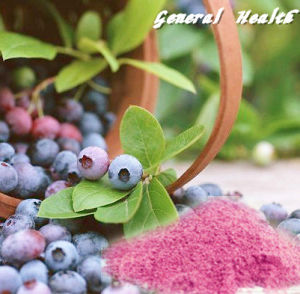 Natural Spray Dried Blueberry Powder (Fruit and Vegetable Powder)