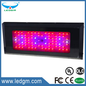 85-100W LED Plant Light Red Blue Purple Infrared Square Lamp pictures & photos