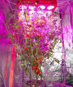 Epistar Chip High Power 1000W LED Grow Light Full Spectrum for Greenhouse pictures & photos