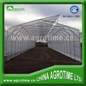 Single-Span Plastic Film Greenhouse for Flower Horticulture (CMB3810)