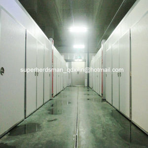 Top Quality Hatchery Equipment for Chicken pictures & photos