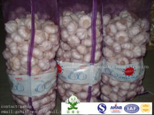 New Crop Fresh Pure White Garlic (size: 5.0cm, 5.5cm, 6.0cm)