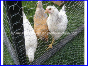 Galvanized Hexagonal Livestock Wire Netting pictures & photos