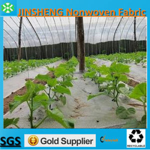 Agricultural Fabric Nonwoven in White Color (15GSM-50GSM)