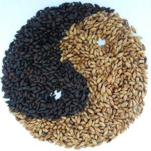 2-Row Barley Malt pictures & photos
