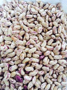 Supply Light Speckled Kidney Beans 2014 New Crop pictures & photos