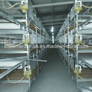 H Type Chicken Cage Poultry Equipments pictures & photos