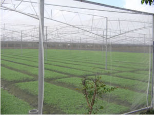 Greenhouse Anti Insect Netting/Agriculture Netting pictures & photos