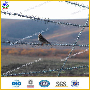 Galvanized Barbed Iron Wire (HPRW-0606) pictures & photos
